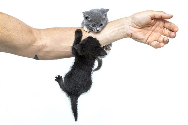 Những căn bệnh do vết mèo cào mất khoảng 14 ngày mới xuất hiện triệu chứng. (Ảnh: Internet)