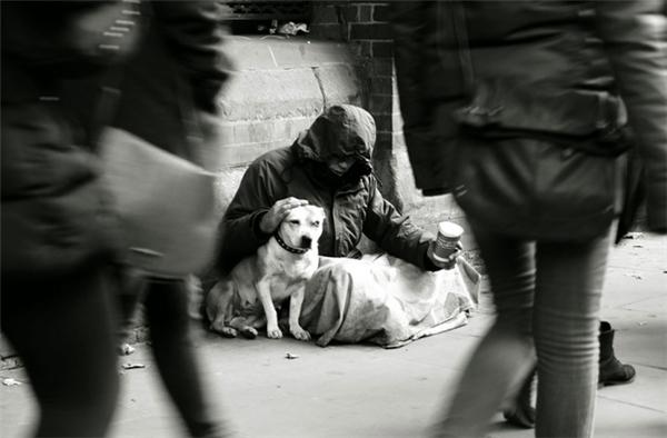 Giữa dòng đời ngược xuôi qua lại, vẫn thấp thoáng đâu đó bóng dáng những chú chó luôn cận kề bên chủ, quyết không rời nửa bước dẫuphải chịu cảnhđói ăn hằng ngày hay nhiều năm chưa được tắm táp.