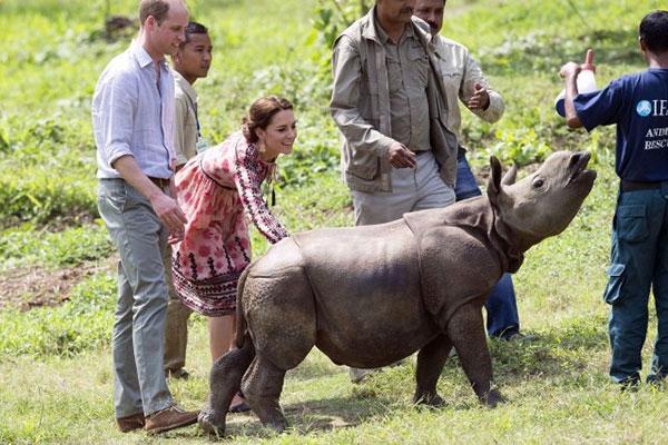 William và công nương Kate trong một chuyến công tác về bảo vệ động vật hoang dã.Ảnh: Mirror.