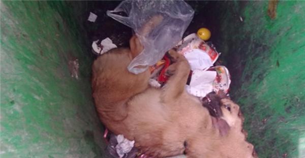 Chú chó đáng thương bị người chủ vứt bỏ ởthùng rác. (Ảnh: Internet)