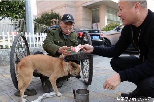 Cảm động trước sự thông minh và trung thành của Tiểu Hoàng, ông Thích thường xuyên tới chơi với cú chó và trò chuyện cùng ông Phó.
