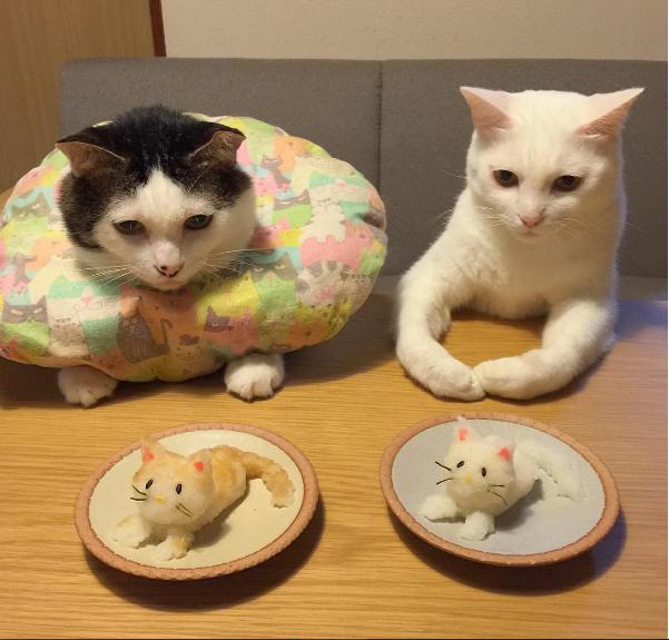 """Trắng:""""Ủa rồi sao hai cái nắm cơm này nó giống tao với mày vậy? Có nên ăn không Đốm?"""",Đốm:""""Để tao nghĩ đã, thấy toàn cơm trắng thôi chả có... mồi""""."""