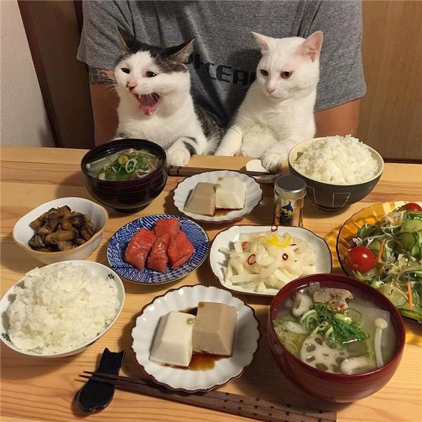 """""""Sen đừng có màchụp hình nữa đi, lo cho em ăn ngay đi em đói lắm rồi""""."""