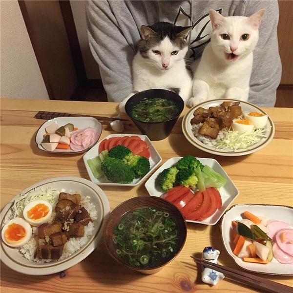 """""""Để Trắng với Đốm ăn hết thịt cho, sen cứ ăn hết chỗ rau ấy đi cho đẹp da""""."""