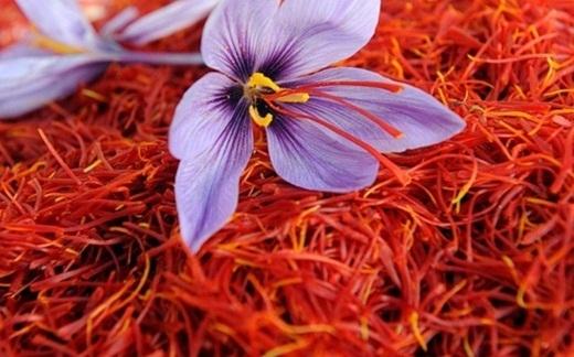 Hàng nghìn bông hoa như thế nàymới lấy được 1kg bột nghệ nguyên chất.