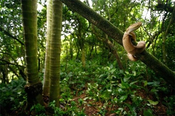 Đảo rắn Brazil được mệnh danh là địa điểmkinh hoàng nhất thế giới