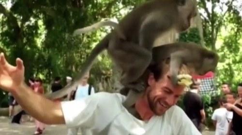 Hành động của hai chú khỉ khiến mọi người không khỏi bàng hoàng.
