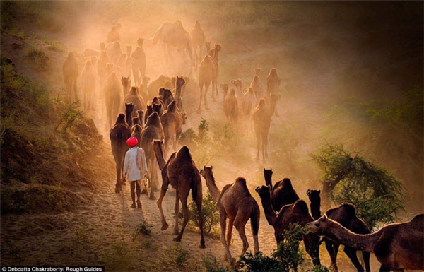 Đàn lạc đà tạo ra lớp bụi mỏng trong buổi chiều trên sa mạc khiến người xem có cảm giác như lạc vào một câu chuyện cổ tích.