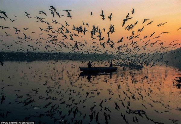 Hình ảnh đàn chim phản chiếu trên mặt nước trong ánh chiều tà.