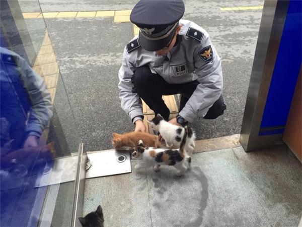 """Xúc động trước câu chuyện thu nạp """"cảnh miêu"""" của cảnh sát Hàn Quốc"""