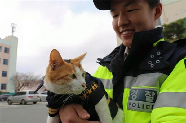Để ghi nhận sự nghiêm túc chấp hànhcủacô mèoMolang và các con, gia đình nhỏ này đã được trao tặng những bộ cảnh phục uy nghiêm.