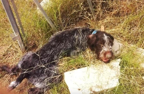 Chú chó tội nghiệp bị đánh đập dã man và bị vứt ra một bờ suối.