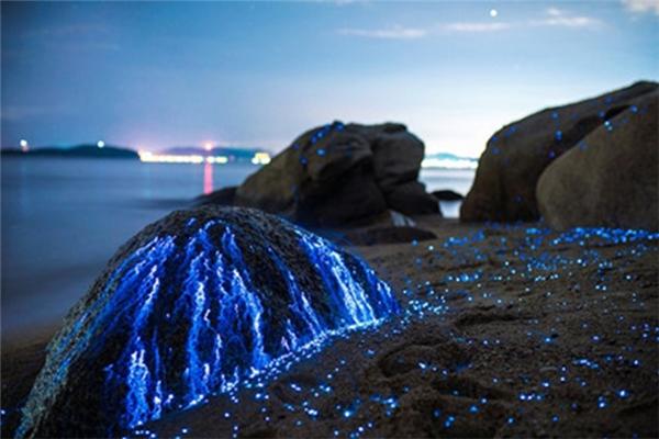 Ánh sáng kì lạ từ hàng nghìn con tôm mê hoặc người nhìn