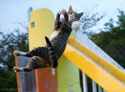 Thế nhưngcho đến nay,Kungfu Mèo nhà tavẫn là tuyệt thế võ công.