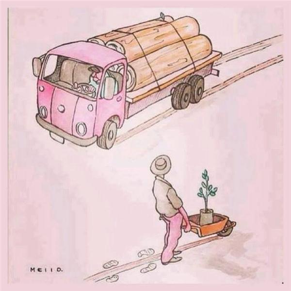 Không ai đánh giá cao công sức lao động của bác trồng rừng hơn bọn phá rừng.