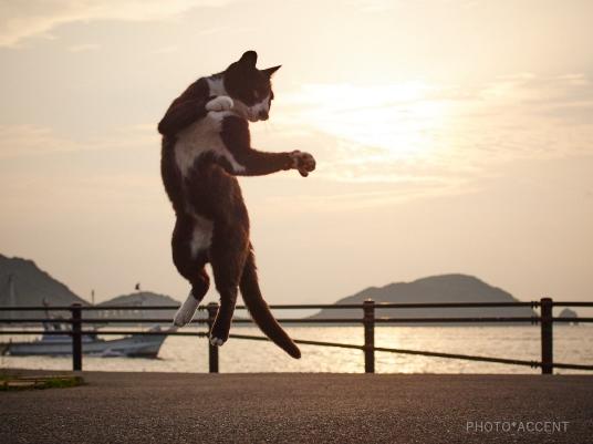 Nếu nói không ngoa thì so với Kungfu Mèo, Kungfu Panda chỉ là hạng xoàng.