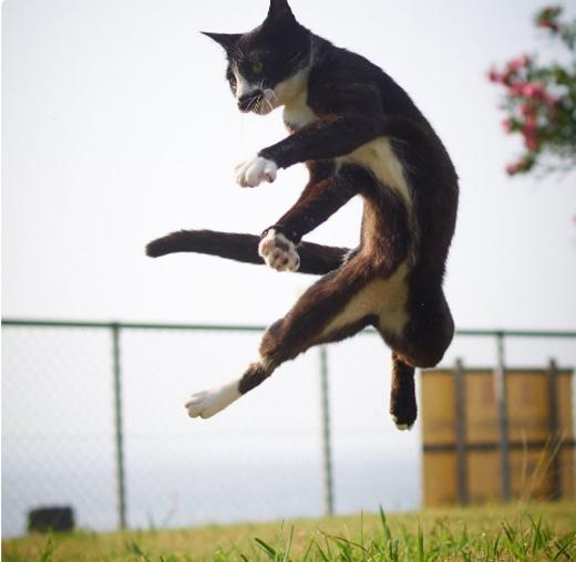 Không chỉ vậy,trướcthuật khinh công của họ nhà mèo, pháiThiếu Lâm Tự cũng phải chào thua.
