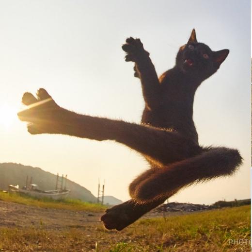 Khó ai có thể kết hợp cú móc xoáy kinh hoàng của Ran Morivà Tán hồn thiết trảo của Inuyasha trong một ngónđòn như võ sĩ mèonày.
