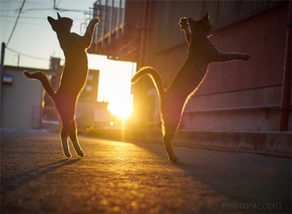 Không chỉ tinh thông võ công, họ nhà mèo còn nổi tiếng với...