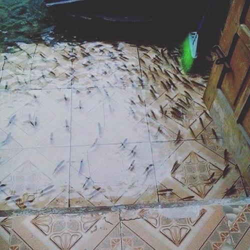 Ngồi co chân trên giường cũng có thể ngắm đàn cá bơi lội tung tăng bên dưới.
