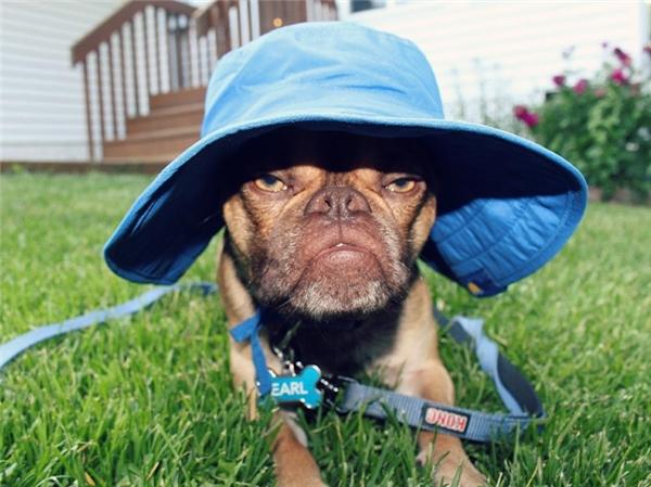 Họ nghĩ đây là chú chó có vẻ mặt hài hước nhất mà họ từng thấy, đó chính là lí do Earl được nhận về nuôi.