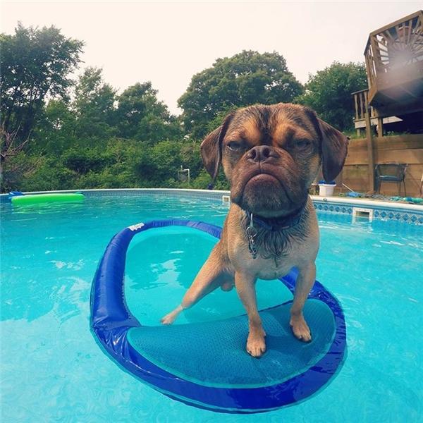 Chú ta cũng không thích bơi hay tham gia bất cứ hoạt động nào có liên quan đến nước.