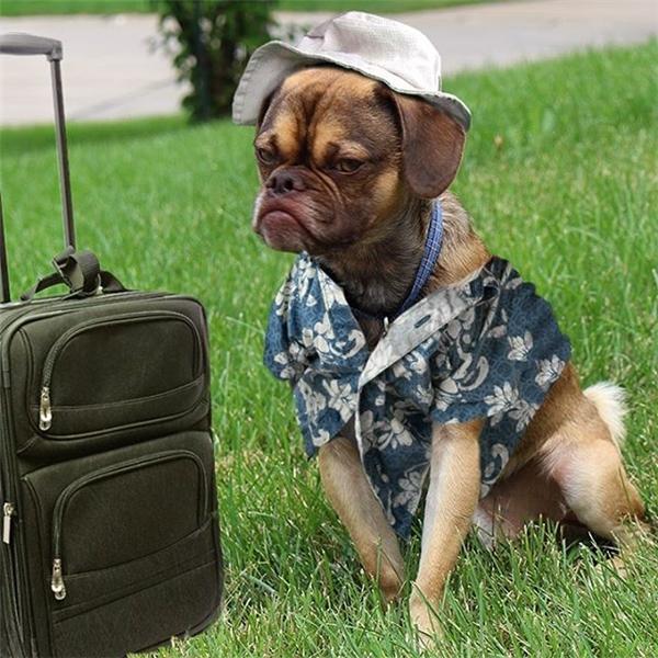 Earl và vẻvui sướng rạng ngời khi được đi du lịch.