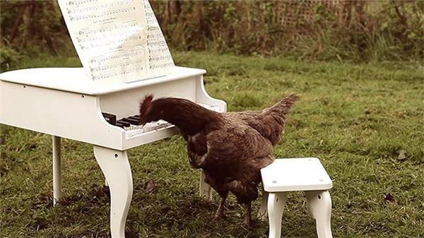 Igorrr đã đặt hạt giống trên bàn phím của một chiếc piano để Patrick có thể mổ