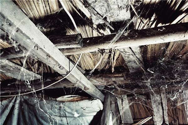 Nhìn lên nóc nhà mạng nhện giăng chằng chịt bên dưới mái tranh lợp lá.