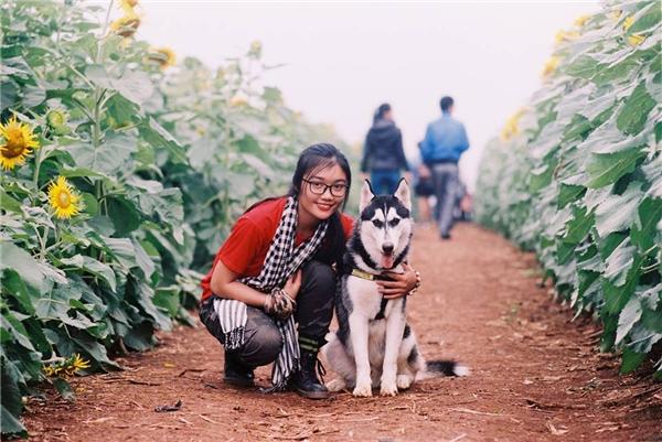 Bun thuộc dòng Husky Siberian, Yến nuôi Bun từ khi nó mới 2 tháng tuổi, đến khi được 3 tháng thì Bun bắt đầu đi du lịch cùng Yến.