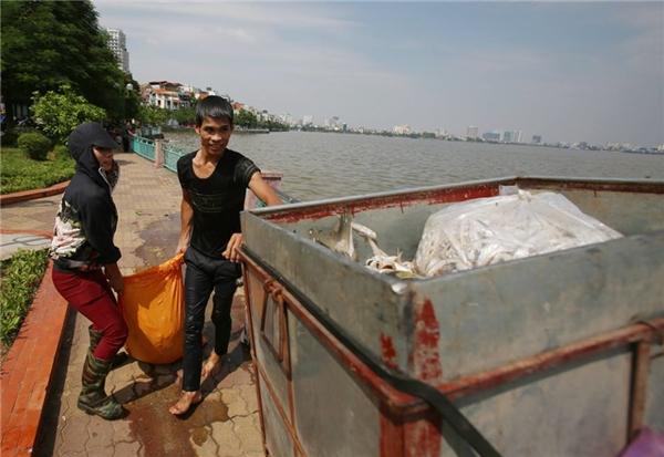 Những người thu gom xác cá chở nhưng bao lớn trên những chiếc xe thùng chuyển cá đi nơi khác. Hiện tại vẫn tiếp tục có một lượng xác cá theo gió được đưa vào ven hồ.