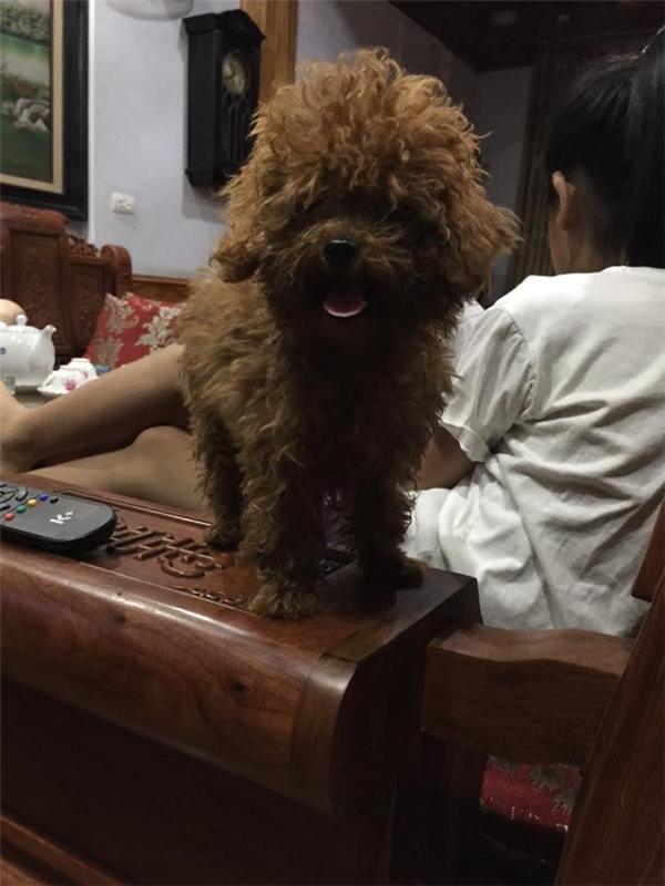 Một ngày nọ, hai chú chó cưng bỗng lăn ra chết khiến gia đình chị Q.A vô cùng buồn bã.