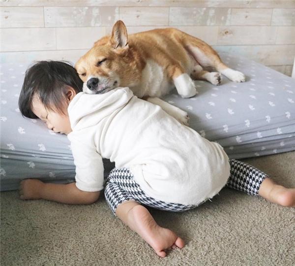 Nhìn chúng người ta có cảm giác rằng chúng đang chơi đùa vui vẻ thì bỗng nhiên lăn đùng ra và cứ thế mà ngủ...