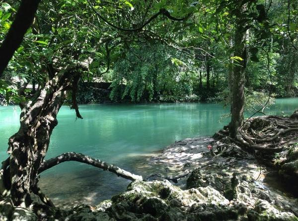 Khu di tích Pác Bó có vẻ đẹp tự nhiên hoang sơ với cây cối chằng chịt, bầu không khí trong lành và làn nước xanh mát.