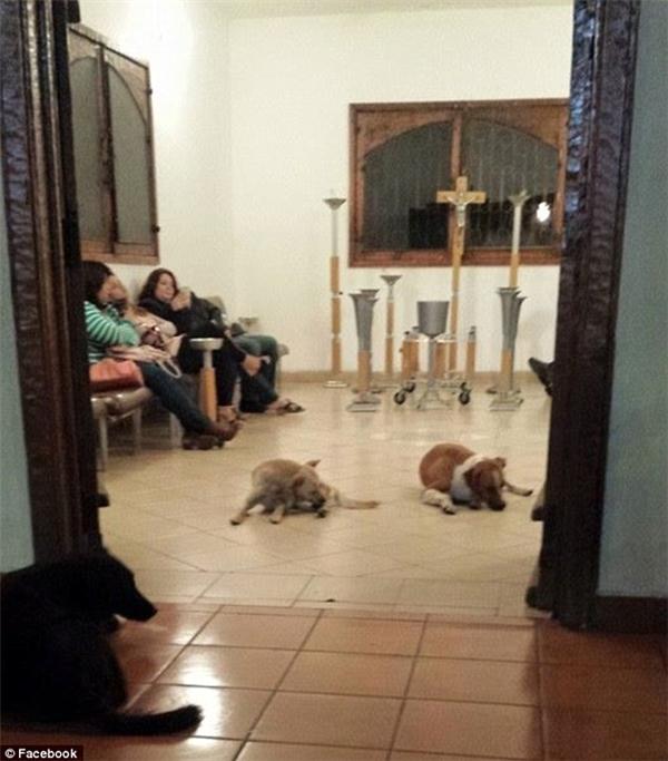 Khi nhận ra lí do chúng kéo đến đây, ngay lập tức, các nhân viên tang lễ mở cửa cho bầy chó vào.(Ảnh: Facebook)