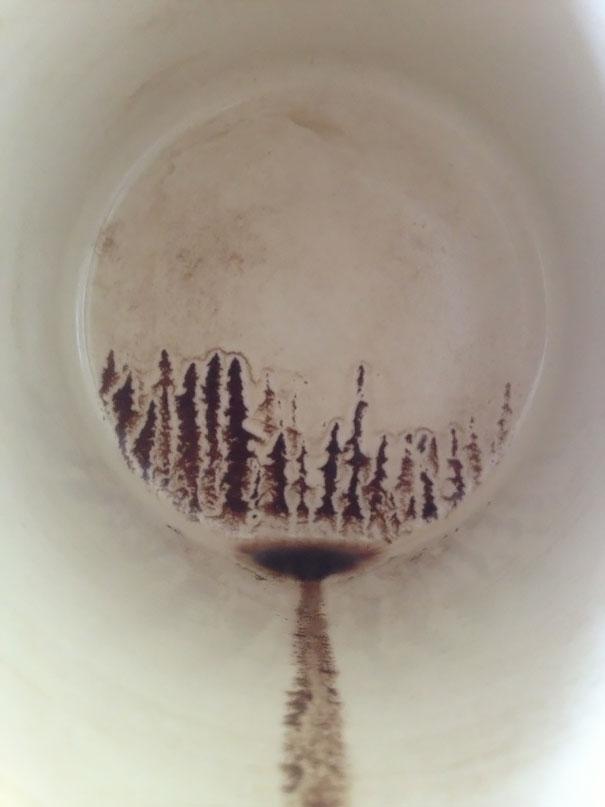 Một khu rừng thông hoang vu hiện lên dưới đáy tách cà phê chỉ còn lại bã.