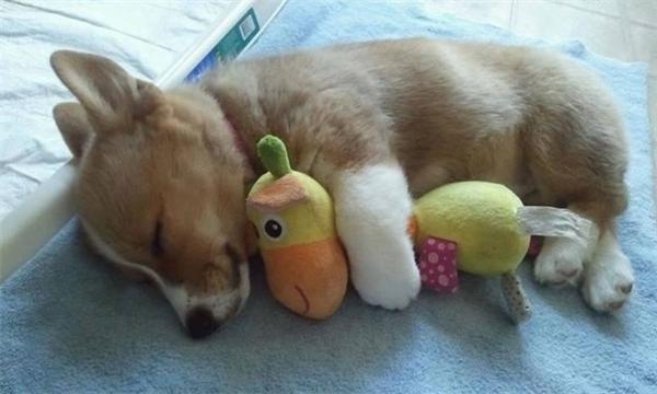 """""""Em ngủ như thế này vì em đang cảm thấy cực kì thoải mái đấy""""."""