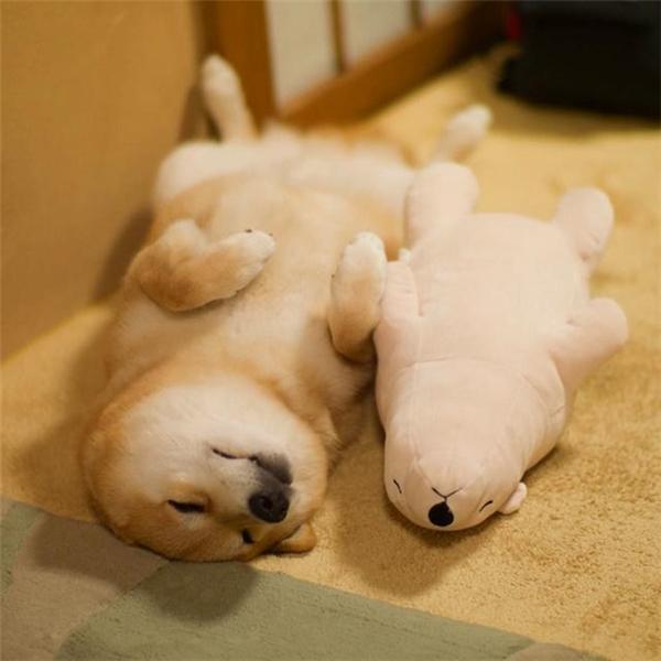 Những chú chó tự lập luôn ngủ ở tư thế này.