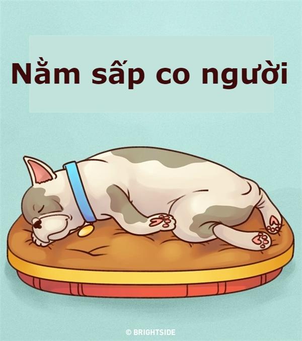 Đoán tính cách của cún cưng qua tư thế ngủ chuẩn 100%