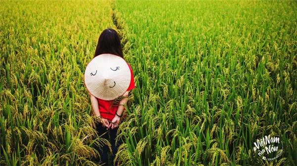 Hoà mình vào cánh đồng lúa ở miền Trung- biểu trưng nông nghiệp của Việt Nam
