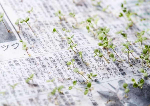 """Những hạt giống đã được đặt sẵn trong các tờ báo, sau khi tờ báo không còn giá trị sử dụng nữa, chúng được """"gieo"""" xuống đất để mọc thành cây con."""