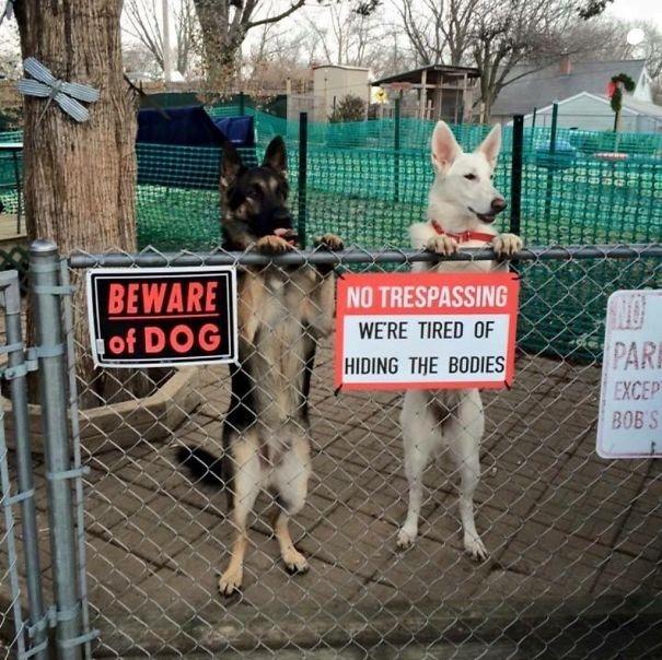 Làm ơn đừng chọc chó. Chúng tôi chôn xác người mỏi mệt lắm rồi.