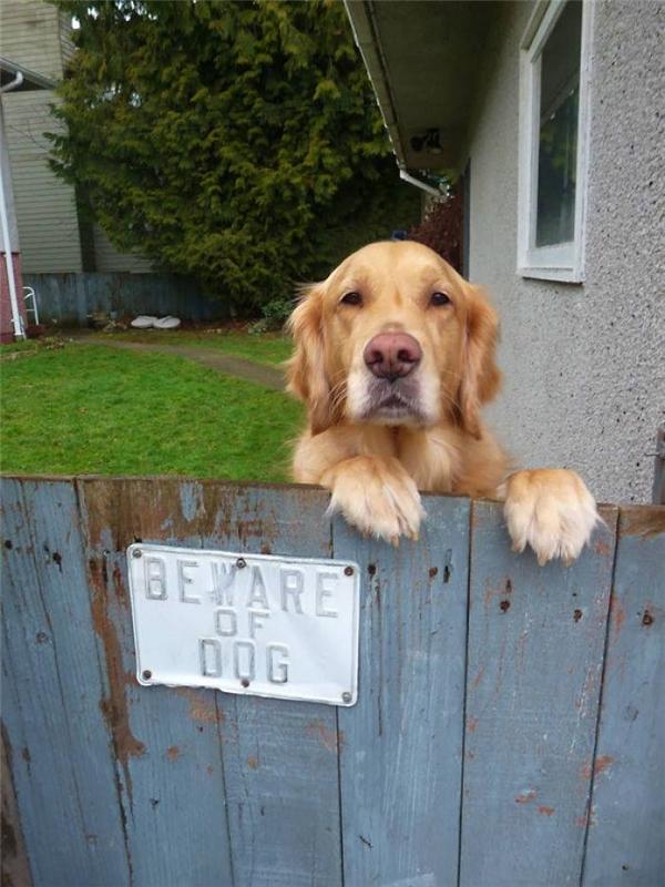 Nhìn mặt nó là biết chó dữ có số có má của xóm này rồi.