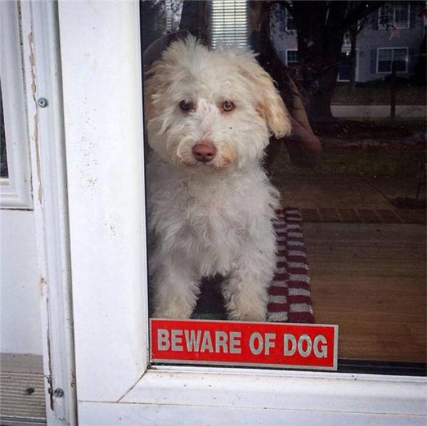 Nhìn cái bản mặt nó lườm lườm thế kia là biết chó dữ rồi.