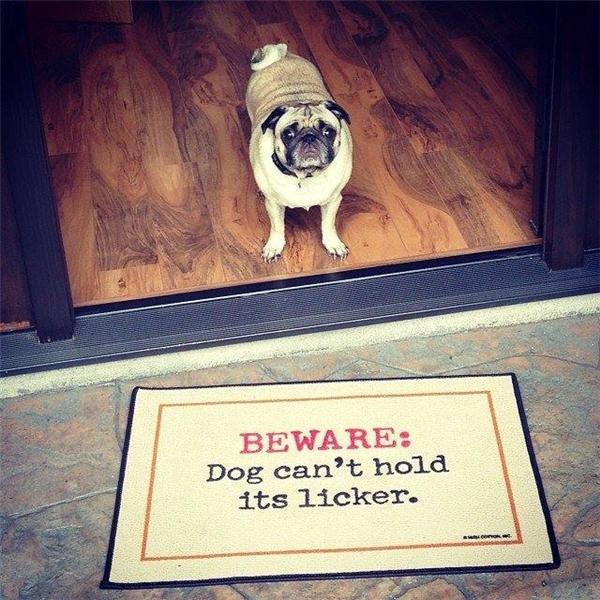 Coi chừng, chó không kiềm chế được cái lưỡi hay liếm.