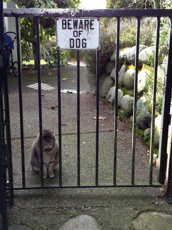 Cẩn thận với con chó. A, nhưng nó đã bị con mèo ăn thịt mất rồi.