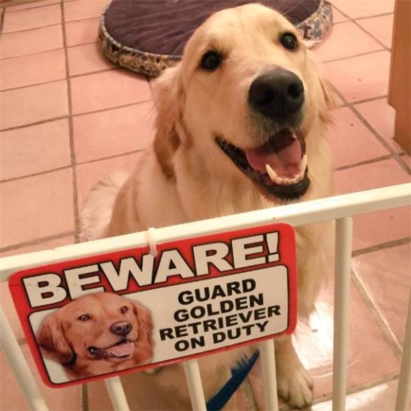 Chó nhà này sẽ chọc cho bạn cười đến chết đấy, cẩn thận tránh xa nó ra nhé.