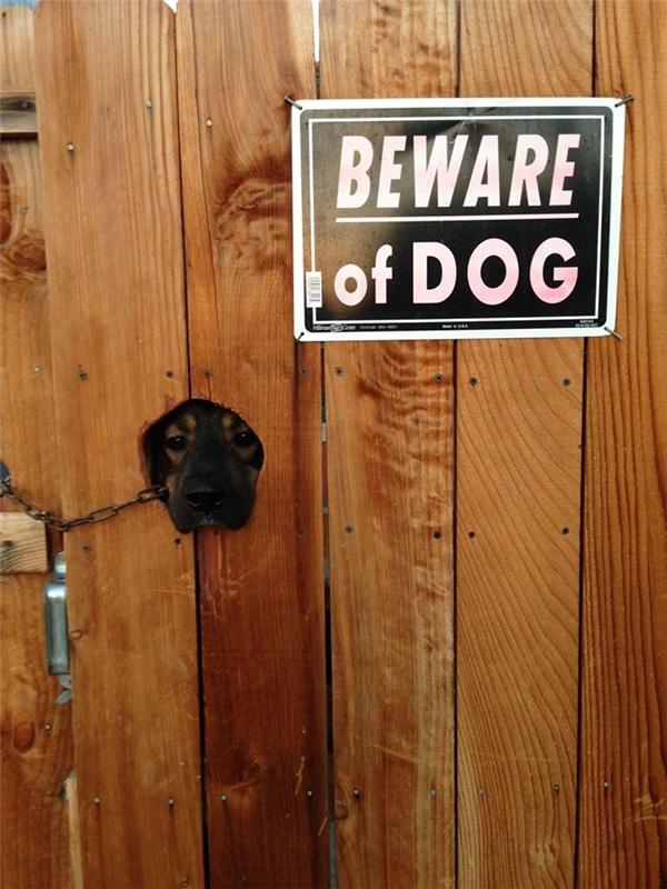 Lỗ này dành cho chó, không được thò tay hay... bất kì bộ phận thân thể nào vào.