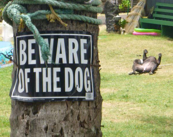 Hãy cẩn thận với mấy con chó khùng.
