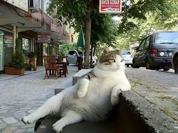 Tombili với dáng ngồi trầm tư nổi tiếng. (Ảnh: Internet)